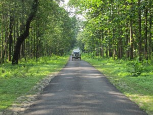 Sundarban Tour From Kolkata