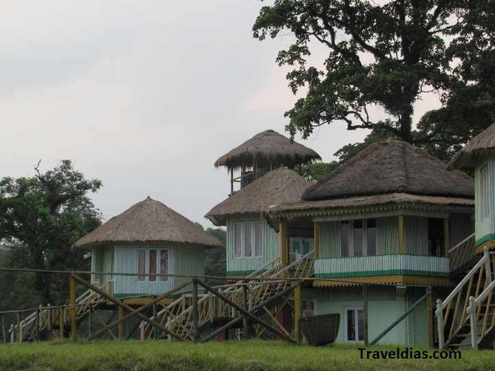 jungle safari gorumara park
