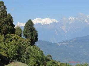 Temi Tea Garden - Sikkim