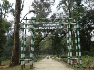 Chapramari forest - Dooars