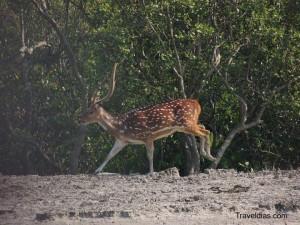 Deer - Dobanki
