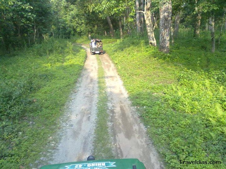 Jeep Safari - Gorumara forest