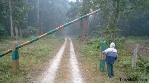 Khoyerbari forest - Dooars