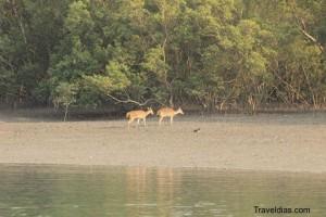 Panchmukhi - Sundarban