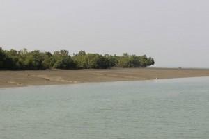 Panchmukhi - Sundarbans