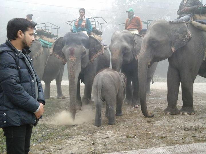 Elephant Safari in Jaldapara