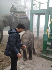 jaldapara elephant safari