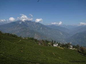 Temi tea garden - Namchi-Pelling