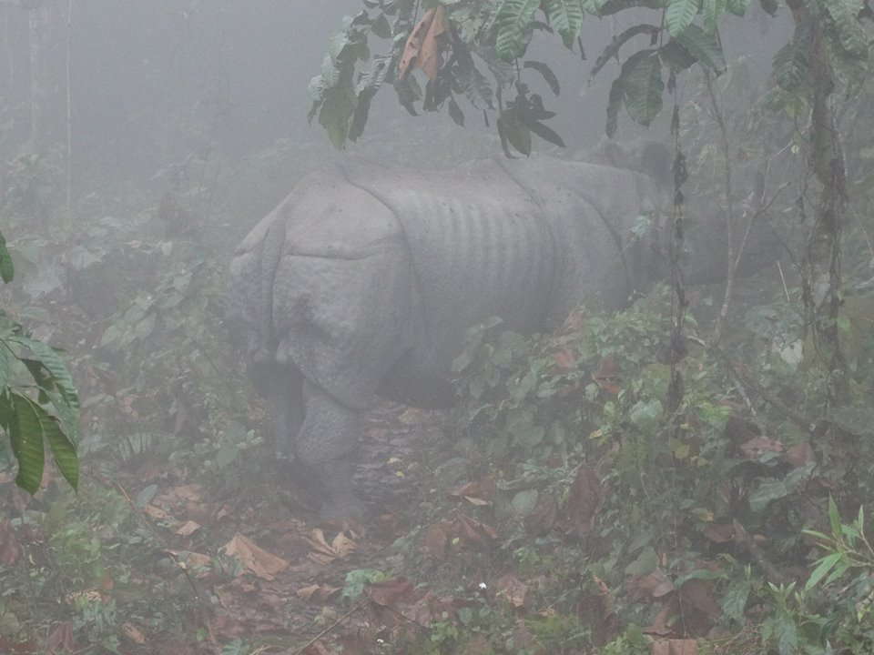 Rhino in Dooars