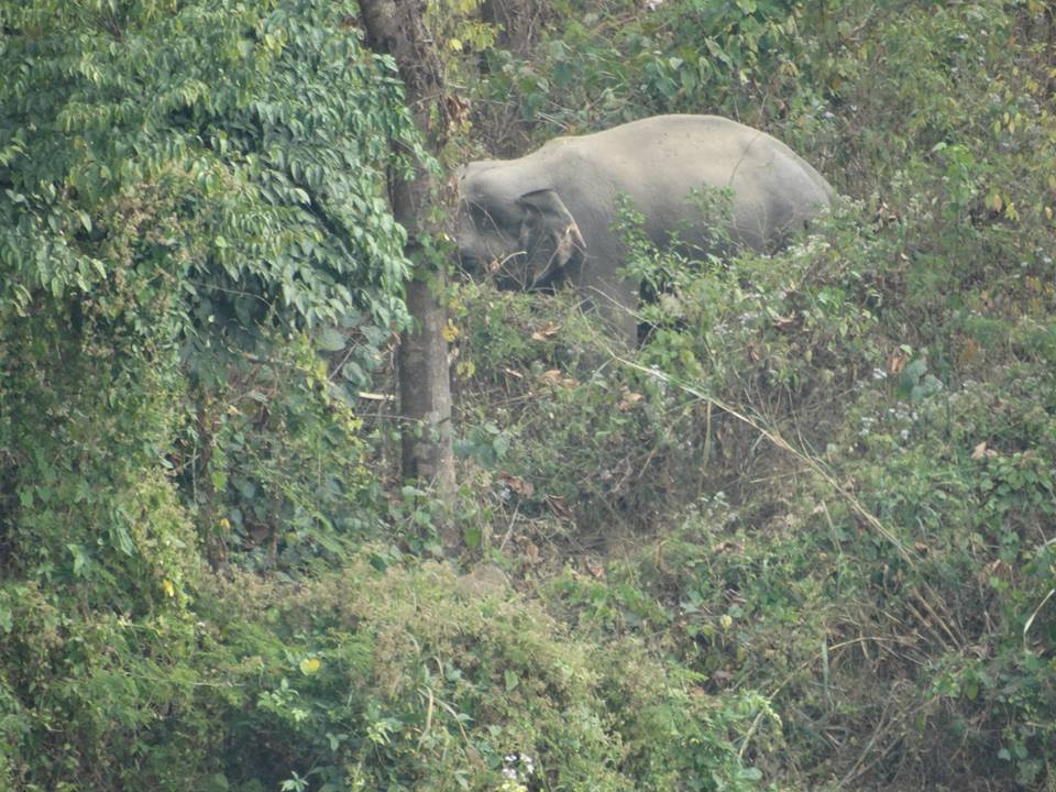 Wild Elephant in Dooars