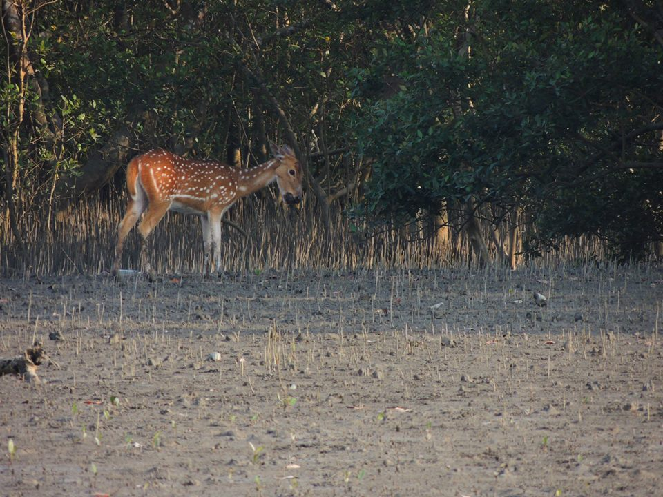 Sundarban Sightseeing