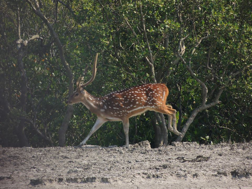 Sundarbans Sightseeing