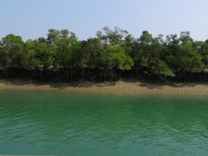 Make Your Trip To Sundarbans A Memorable One!